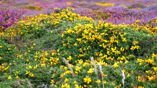 Barevné žluté fialové divoké květy kvetou jako koberec na pozadí.