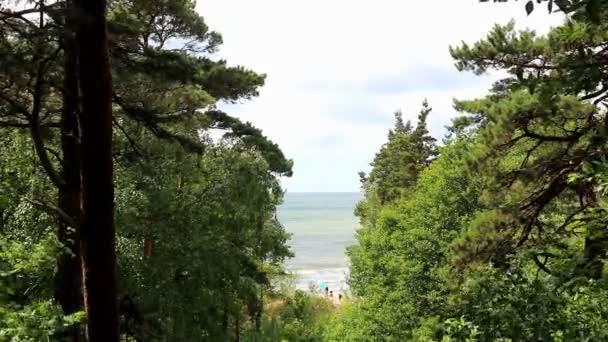 Výhled na moře přes propast strom