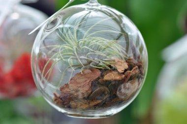 Glass Sphere Terrarium