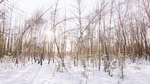 slunečný mrazivý den v břízovém lese v zimě. Krásné lesní pozadí, kopírovat prostor pro text, krajina