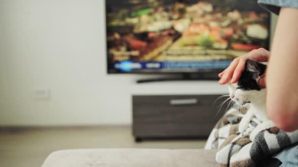 Evcil kediyi okşayan adam evde oturup televizyon izlerken evcil kediyi kafasından öpüyor. Cat sevgi dolu sahiplerinin kucağında yatıyor. İlgi, şefkat konsepti. Rahatlık, sükunet. Hayvan dostluğu. Dinlen.
