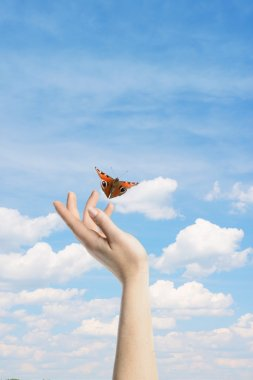 The Butterfly in your hands