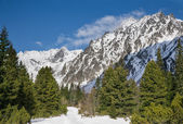 Breathtaking view of snowy mountains in the Tatra mountains