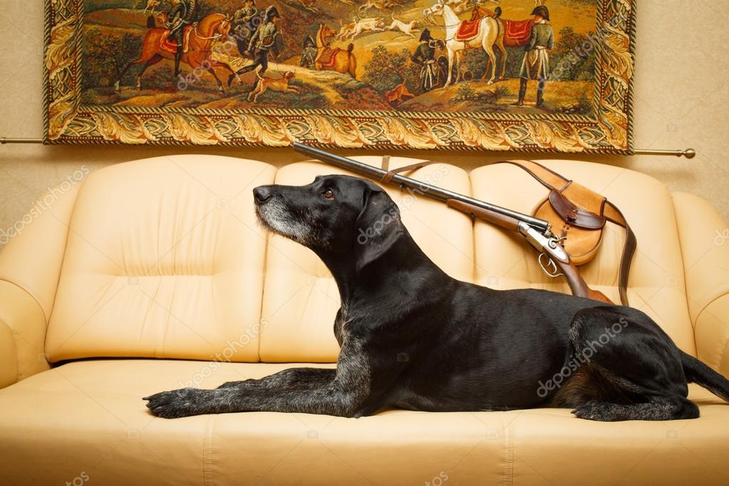 Hund In Wohnung Stockfoto Dragonika 113491430