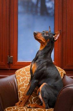 beautiful Animal dog