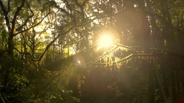 Světlice večerního slunce vycházející z deštného pralesa na naučné stezce kolem Kew Mae Pan, Chiang Mai, Thajsko.