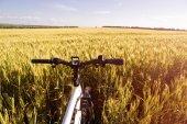 Fotografia Estate foto allaperto e-bike nel campo di frumento delloro