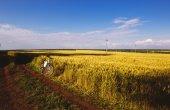 Horské kolo na slunečný den na polní cestě