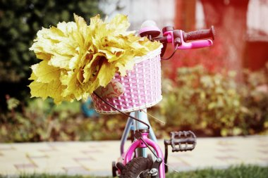 Bike basket with maple leaves, close up photo, autumn concept
