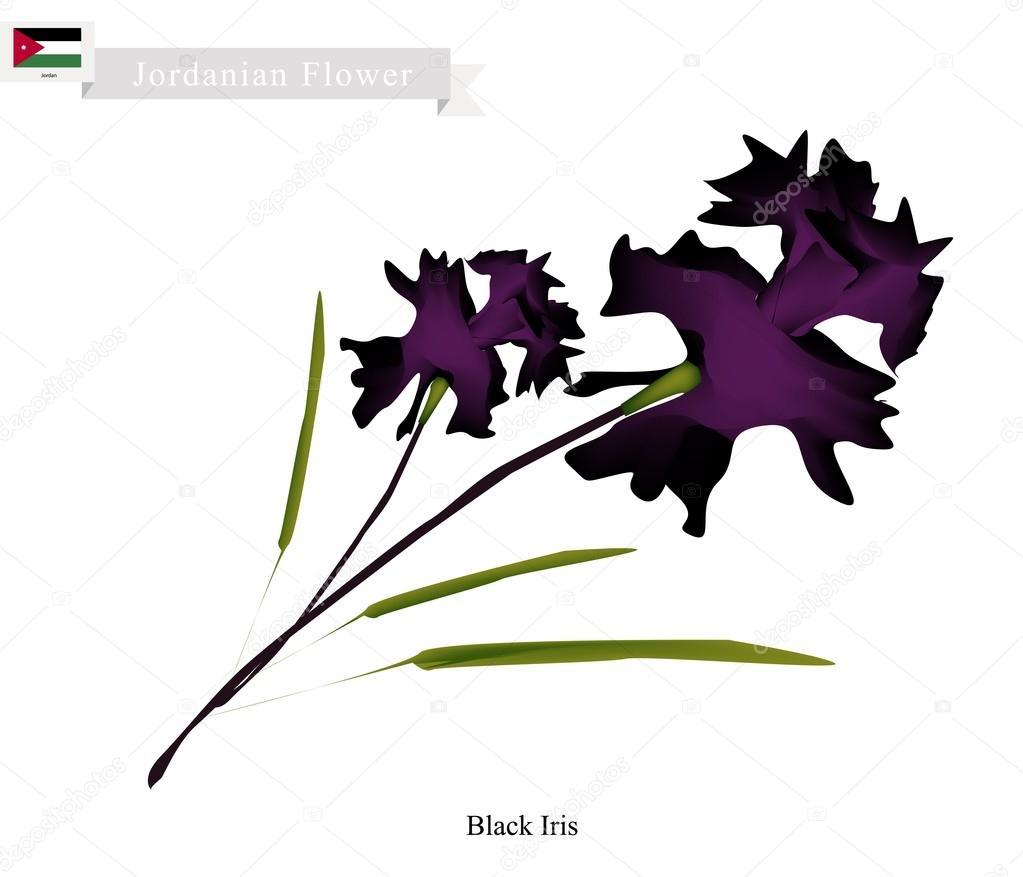 Black iris the popular flower of georgia stock vector iamnee georgia flower illustration of black iris flowers one of the most popular flower in georgia vector by iamnee izmirmasajfo