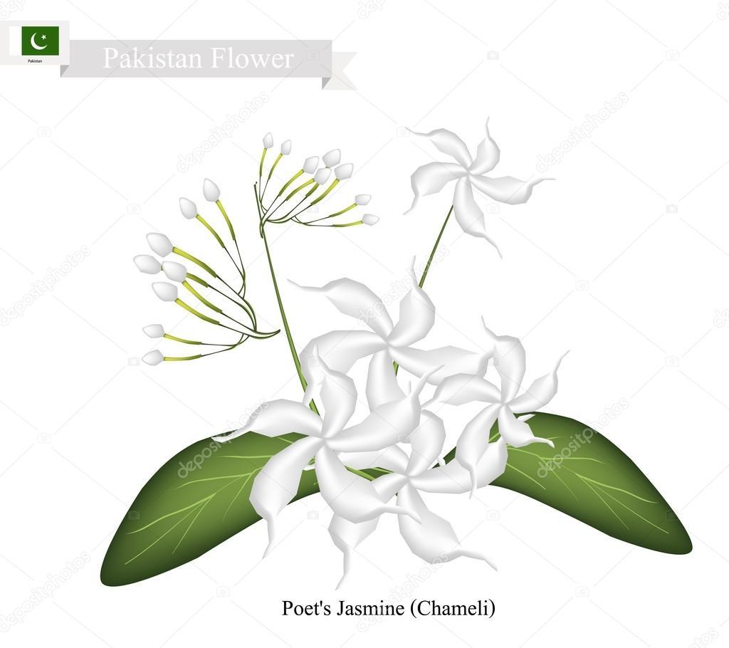 White Flower Clipart Png , Png Download - Jasmine, Transparent Png - vhv