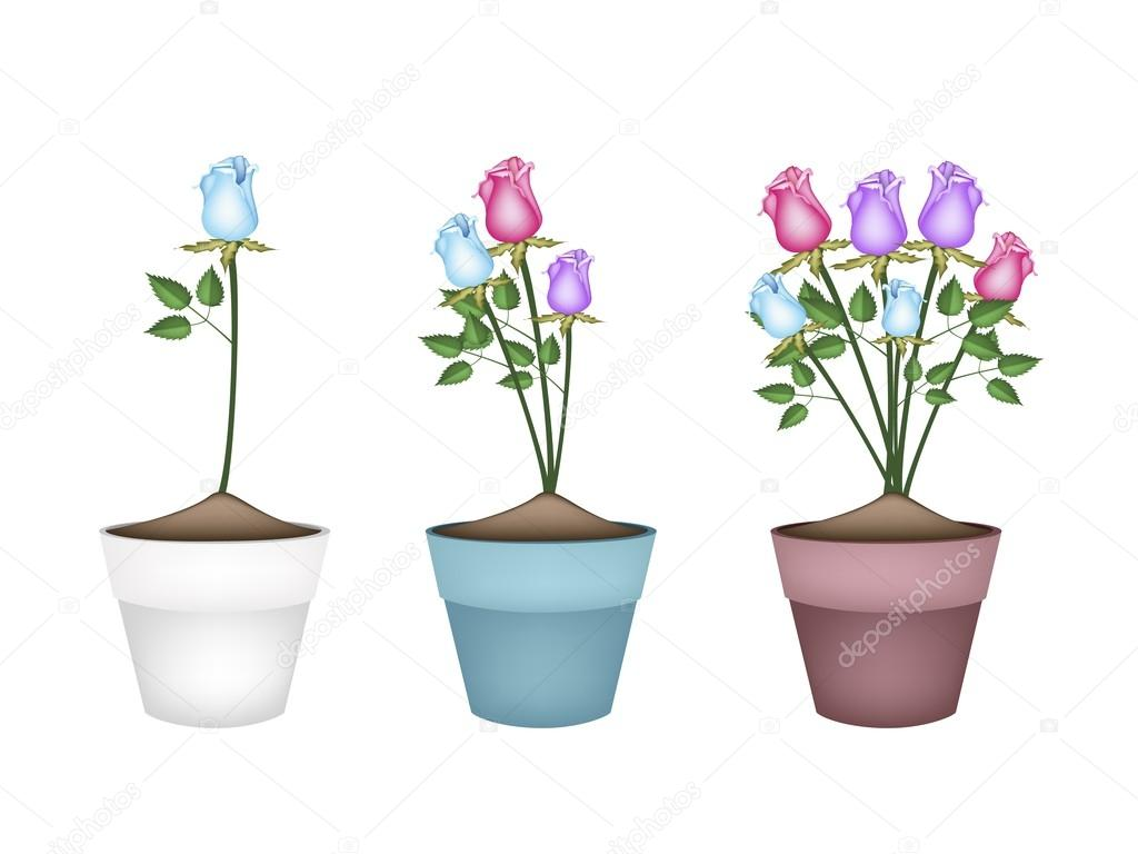 Colorful Roses In Three Ceramic Flower Pots Stock Vector Iamnee