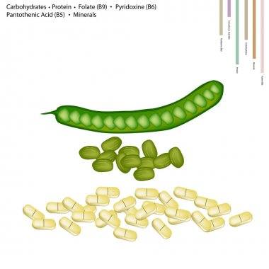 Twisted Cluster Bean with Vitamin B9, B6 and B5