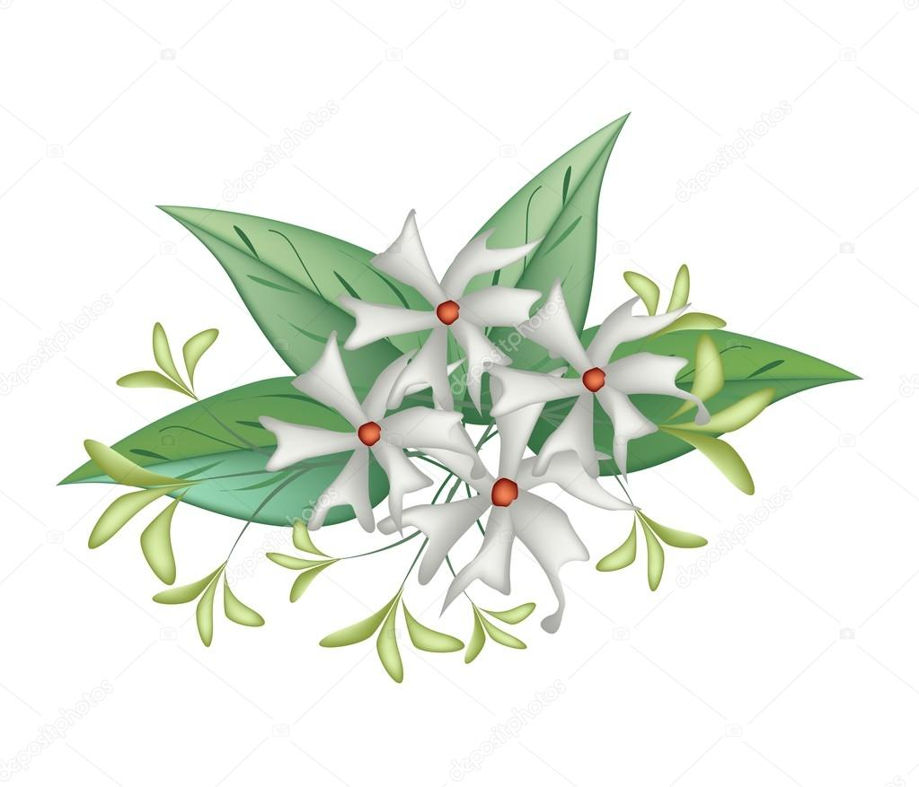 Beautiful night blooming jasmine on white background stok vektr beautiful flower bunch of white tuberose flowers or night blooming jasmine with green leaves isolated on a white background iamnee vektr izmirmasajfo