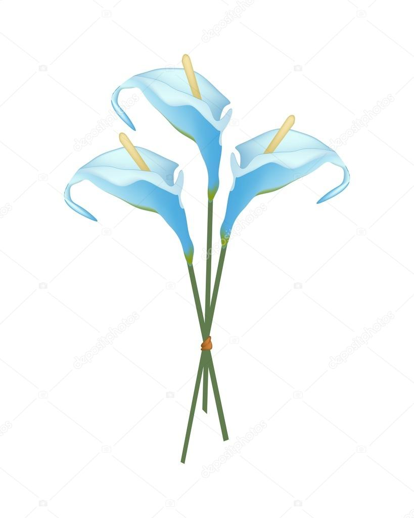 Beautiful Blue Anthurium Bouquet or Flamingo Bouquet