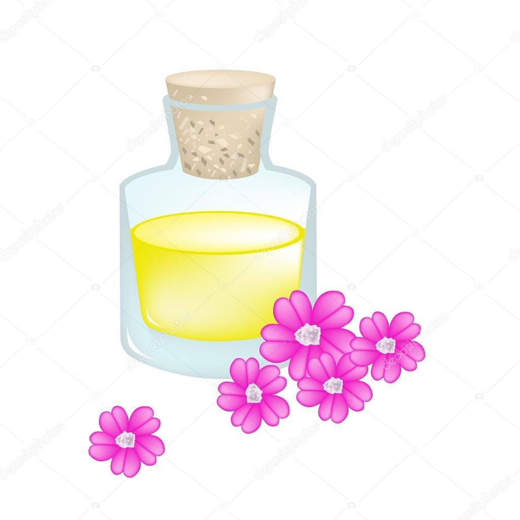 Pink Yarrow Or Achillea Millefolium With Essential Oil Stock