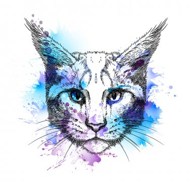 Hand Drawn stylized portrait of cat face with watercolor blots isolated on white background clip art vector