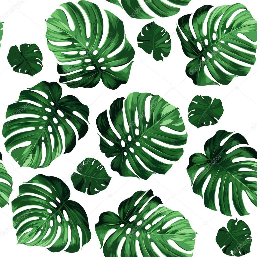 wz u00f3r li u015bci monstera grafika wektorowa  u00a9 antart 99889716 tropical island clipart free tropical island clipart black and white