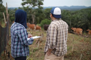 Asian muslim woman dan man doing deal agreement on domesticated cattle cow, couple of farmers controlling their organic beef farm
