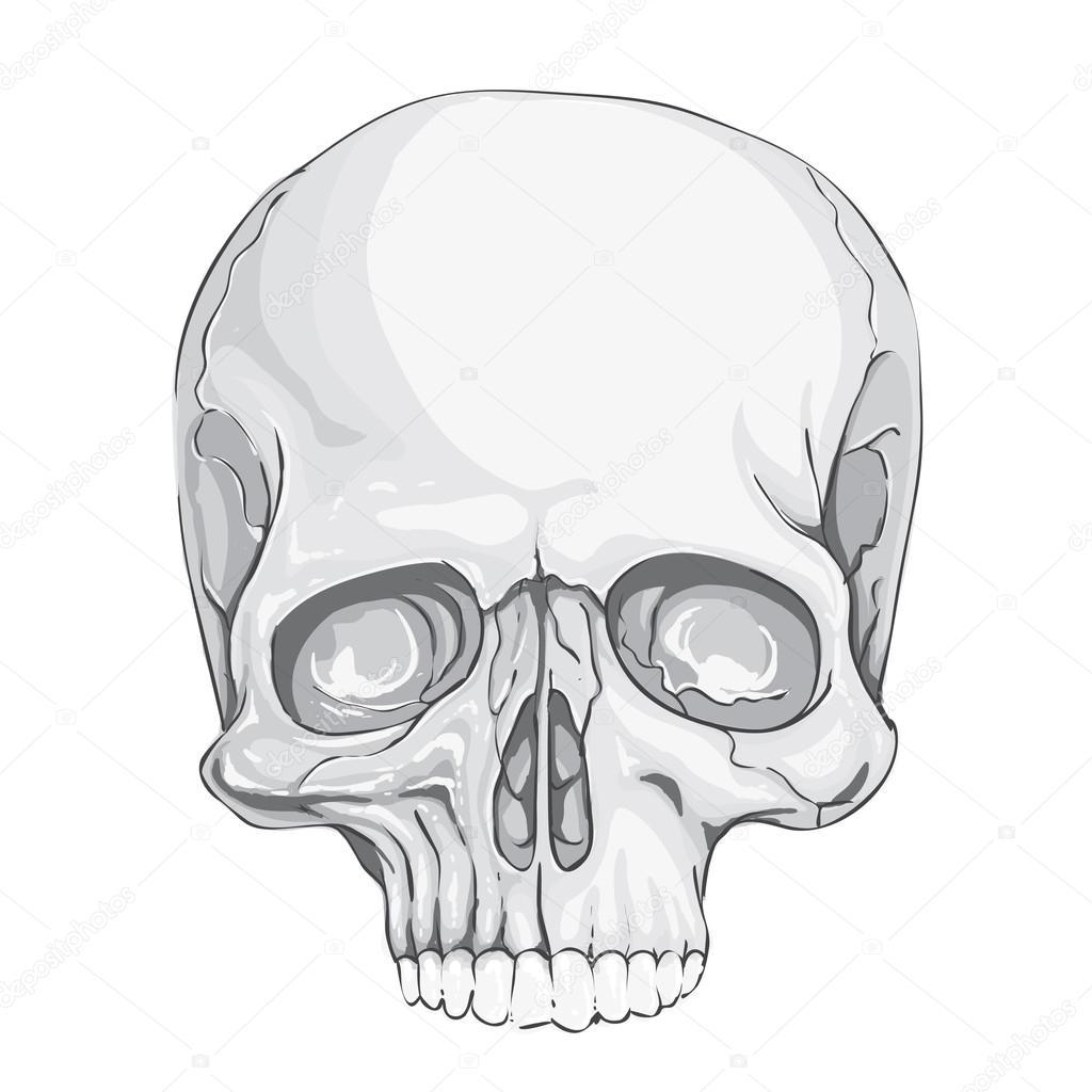 Ilustración de cráneo humano — Archivo Imágenes Vectoriales ...