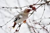 Fotografie Vögel der Steppen
