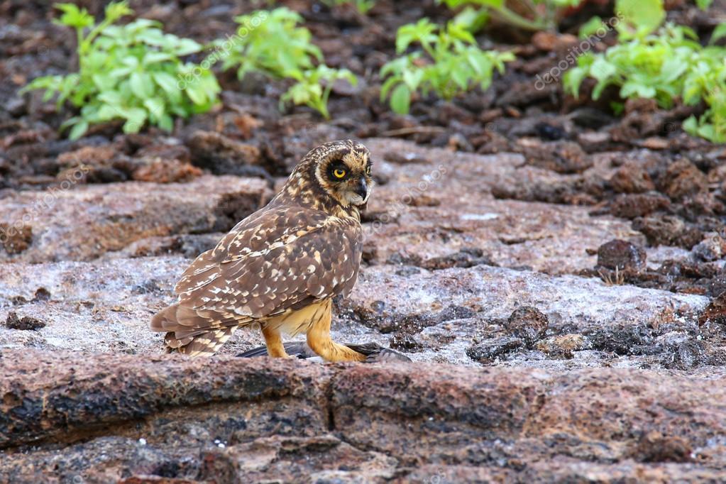 Αποτέλεσμα εικόνας για Εθνικό πάρκο Galapagos-Εκουαδόρ