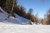pista di sci in montagna tra gli alberi