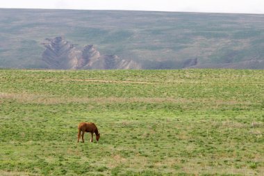lone horse in the steppe