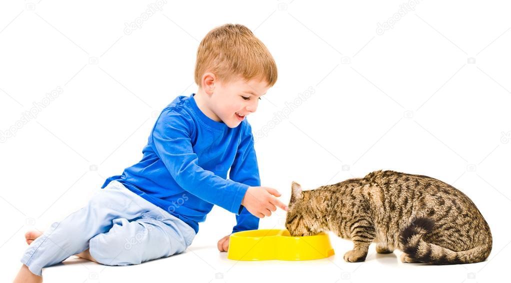 Картинки мальчик кормит кошку