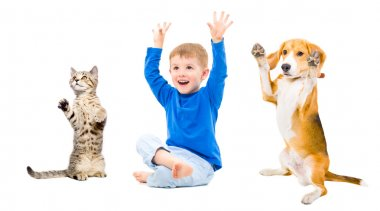 Cheerful boy, dog and cat