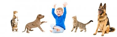 Group of a cheerful pets and kid together