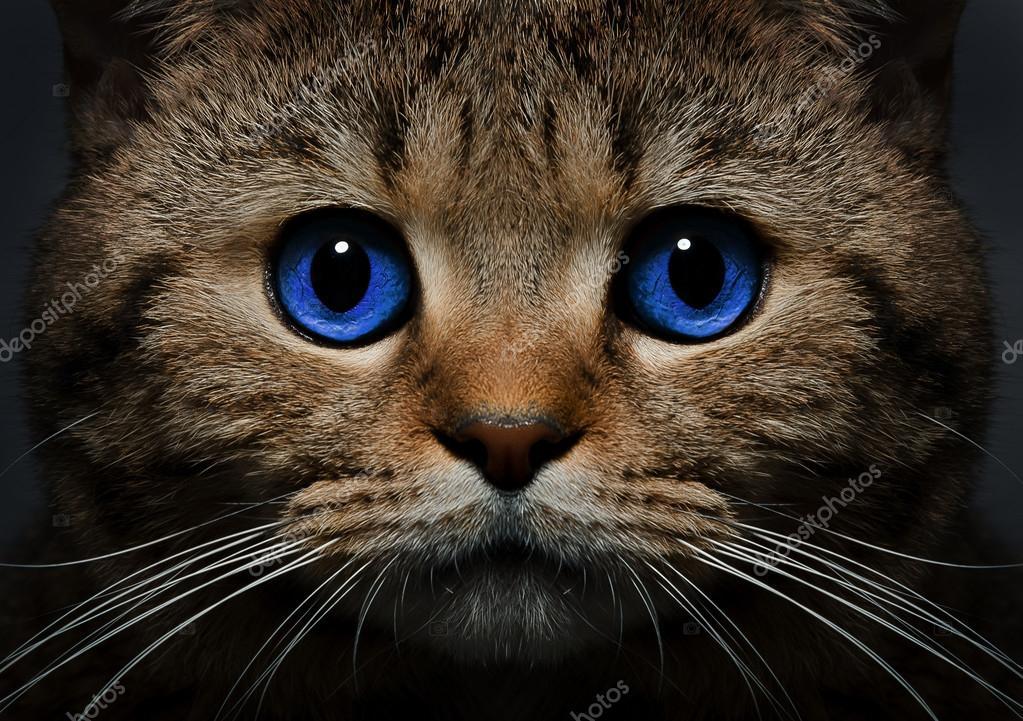 Скачать Обои На Телефон Коты
