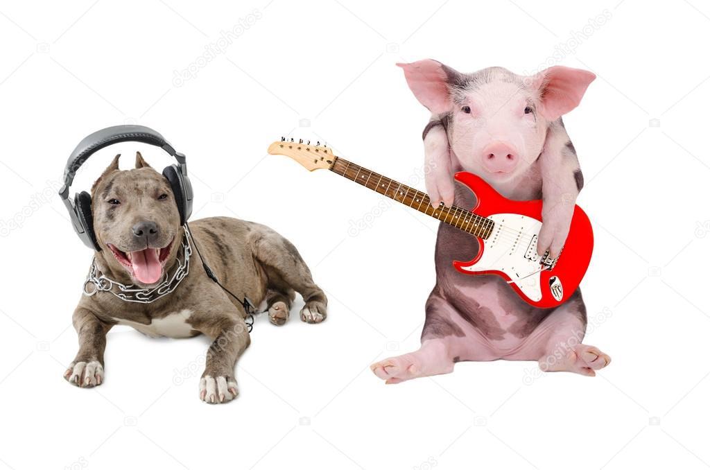 правило, свинья в наушниках картинка расположить