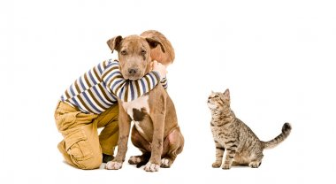 Affectionate boy, pitbull puppy and cat