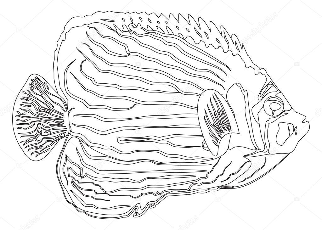 Libro para colorear - peces — Archivo Imágenes Vectoriales ...