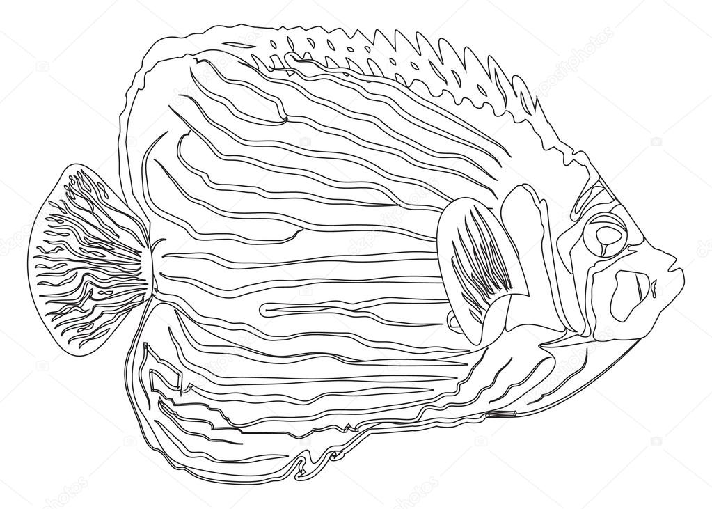 Libro para colorear - peces — Vector de stock © anadunjakia #94990924