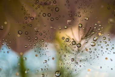 Drops on a glass.