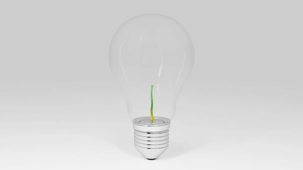 Plant growing in a light bulb