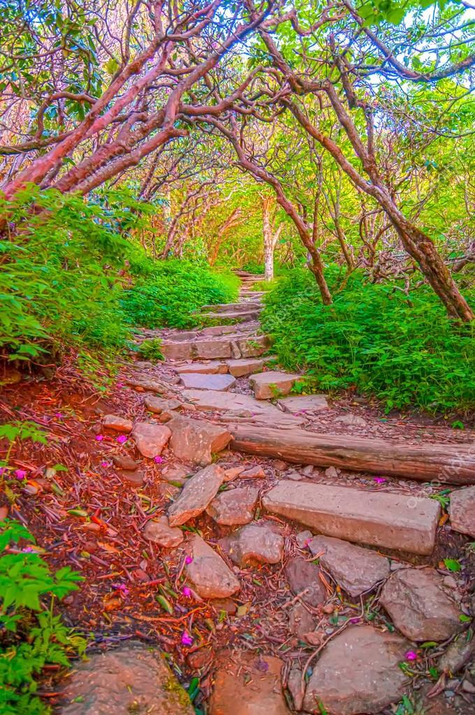 Craggy Garden Trail on an autumn day