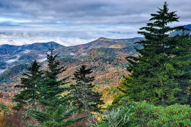 autumn foliage on blue ridge parkway near maggie valley north ca