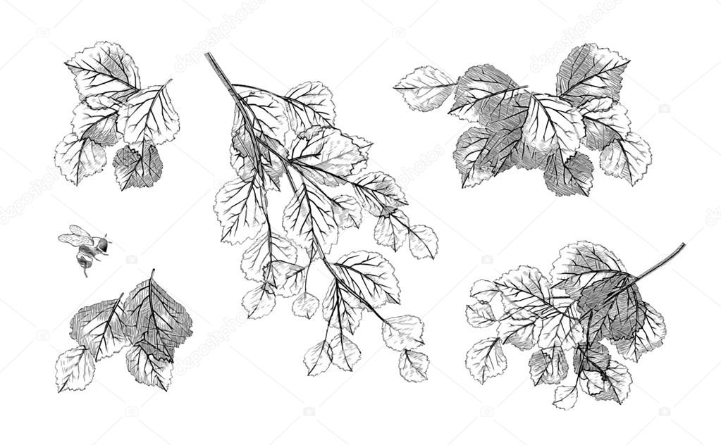 Tree branch leaves vector set