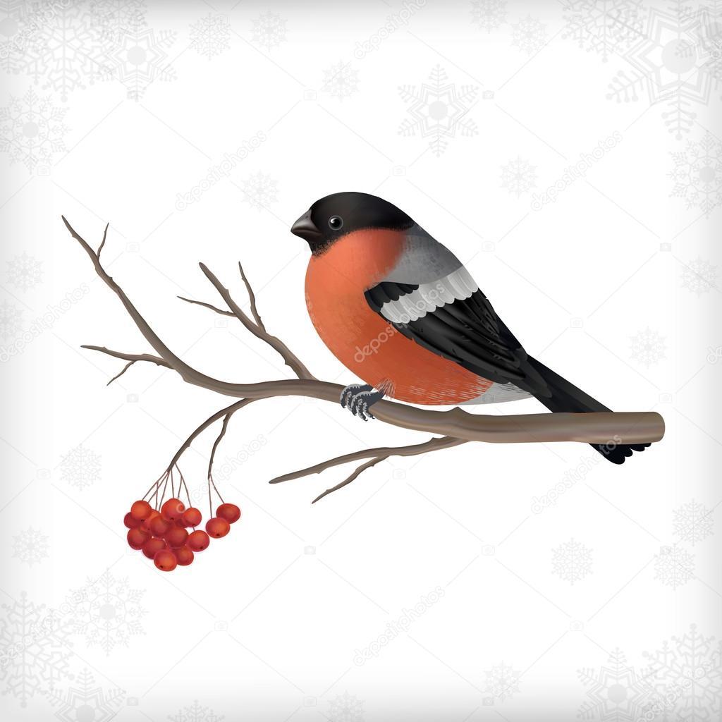 Gałęzie Drzewa Zima Ptak Gil Grafika Wektorowa Kostins 80387472