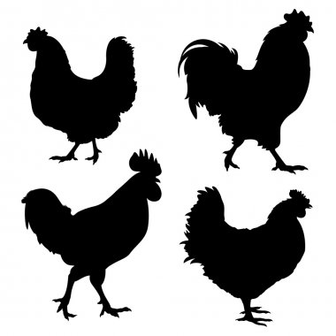 Silhouettes of chickens and roosters isolated on white stock vector