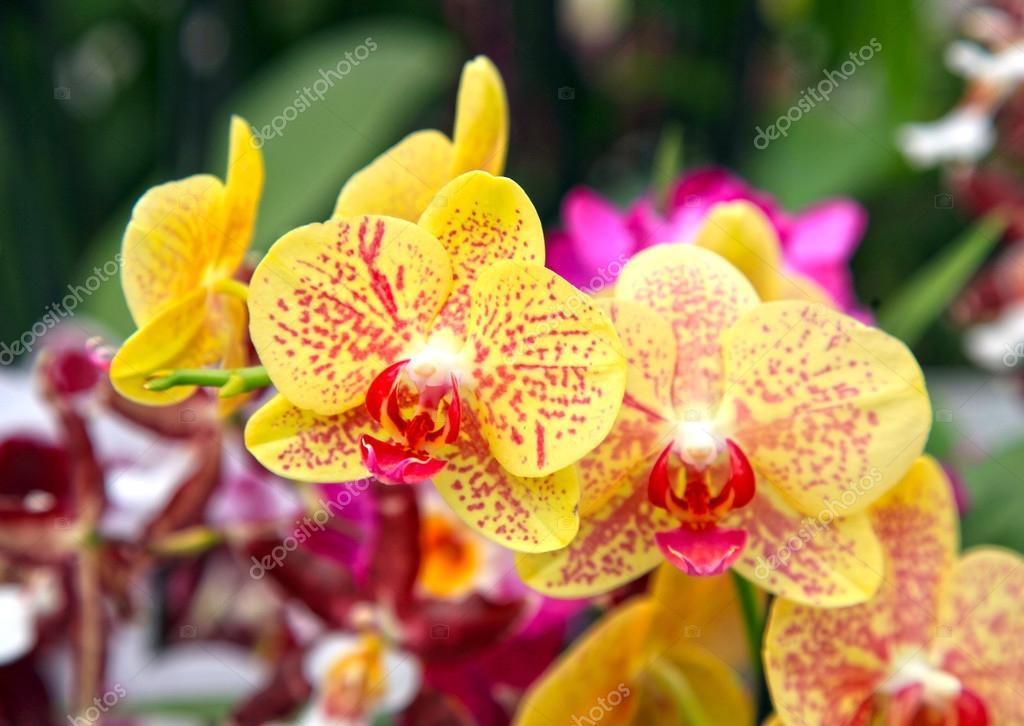 Цветы желтого цвета с фото и названиями