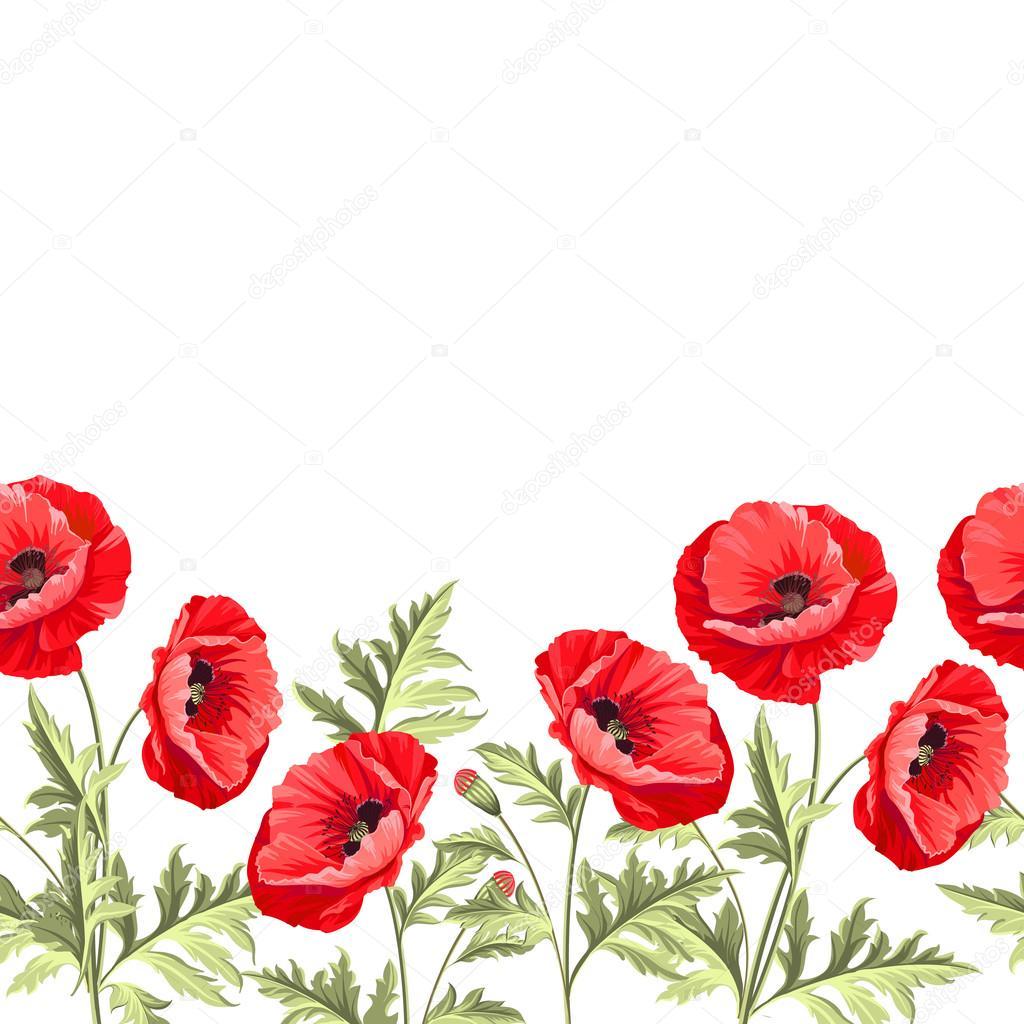 Bunch Poppy Flowers On A White Background Stock Vector Kotkoa