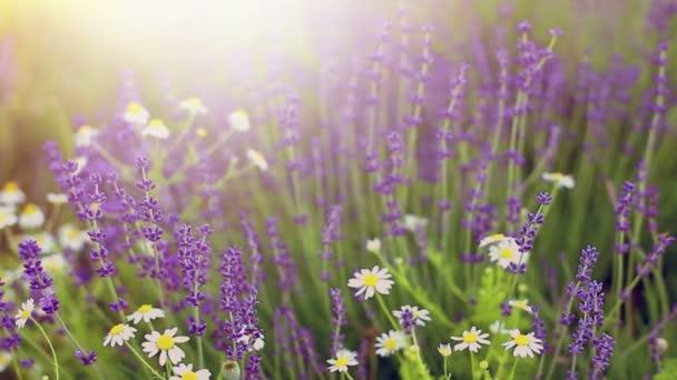 Blooming flowers field.