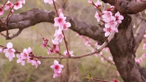 jarní květ pozadí.