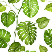 Fotografie Aktuální palmové listy