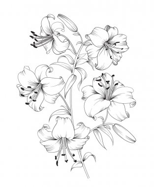 Group of lily flowers. Floral background with blooming lilies isolated on white background. Vector illustration stock vector