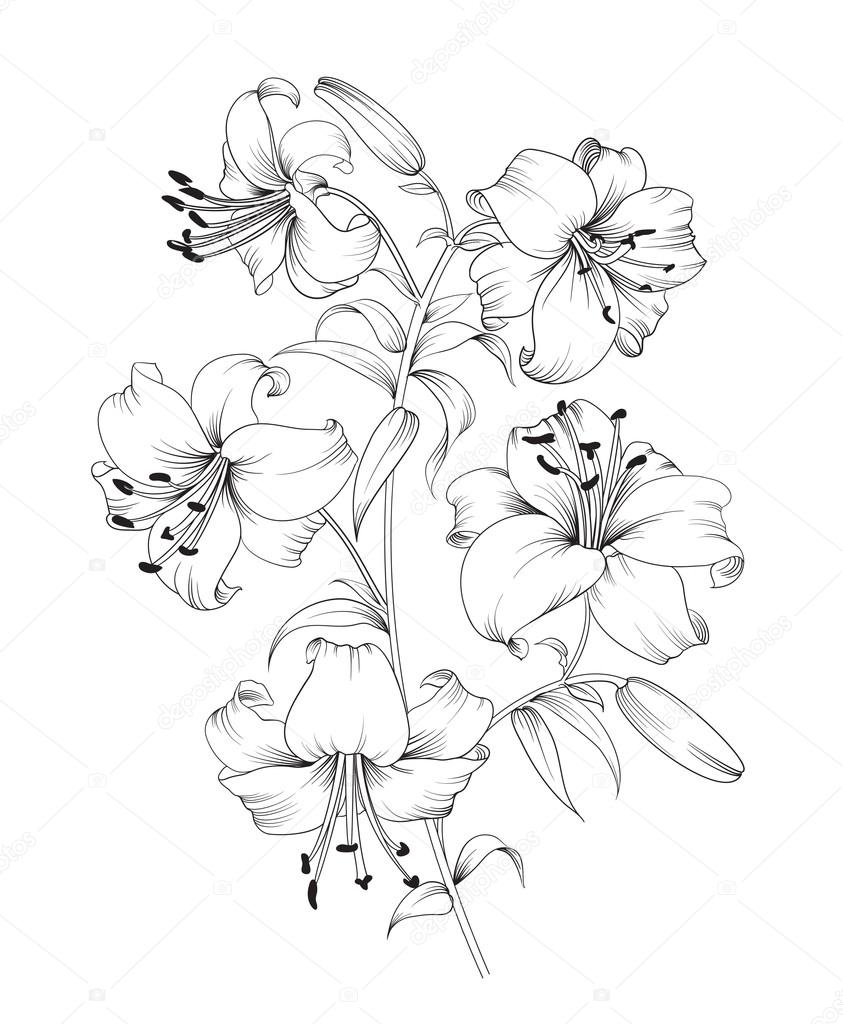 Lily flower composition.